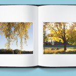 Photo Book: tree in Fall