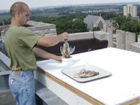 adam feeding quail