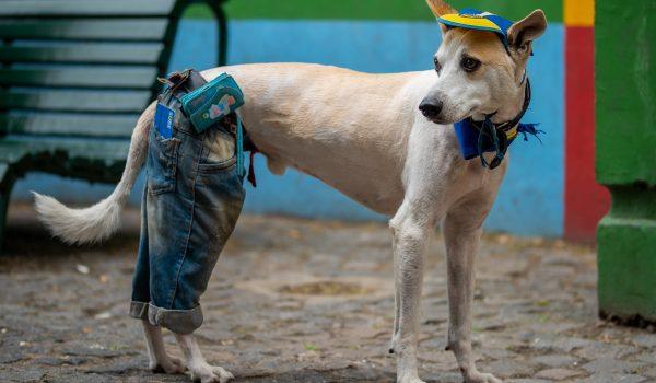 Boca Puppy!