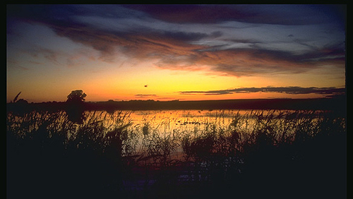 wetland-sunset