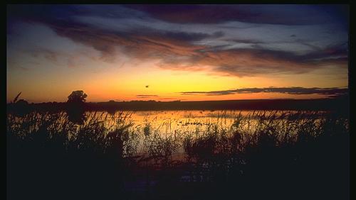 wetland-sunset