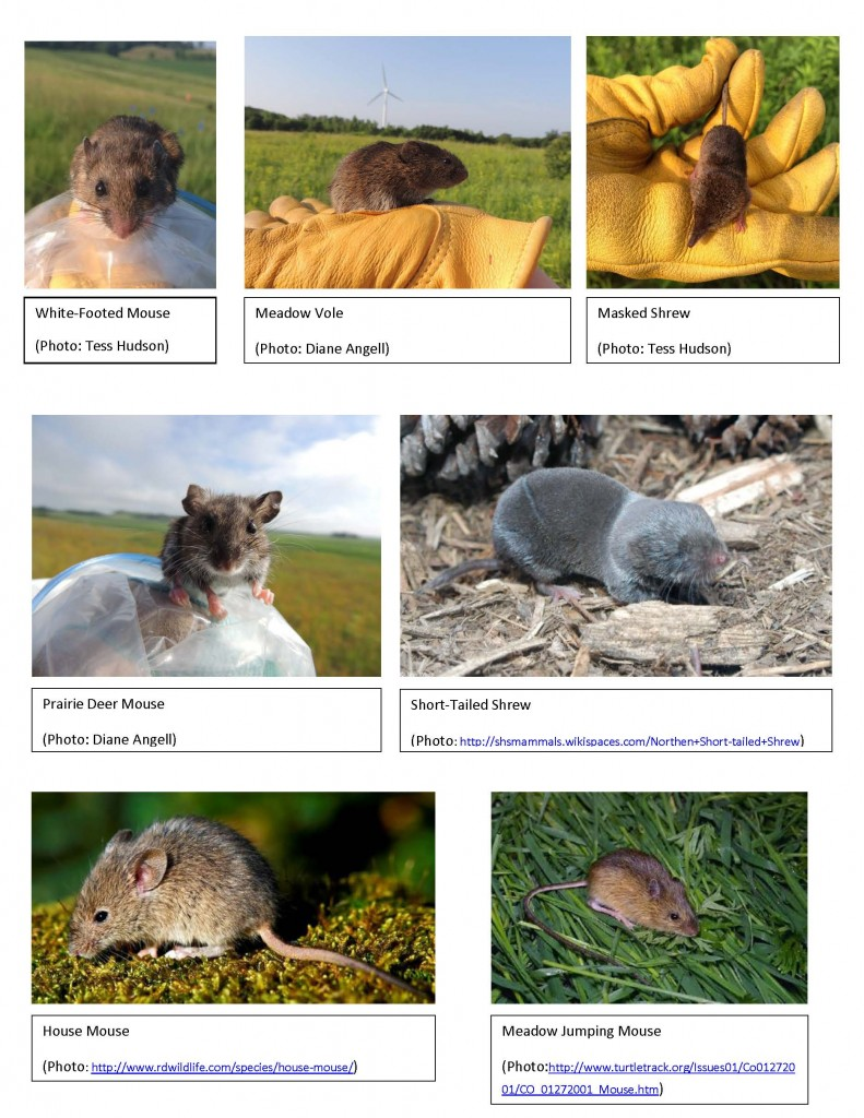 Small Mammals of the St. Olaf Natural Lands -- PICTURES