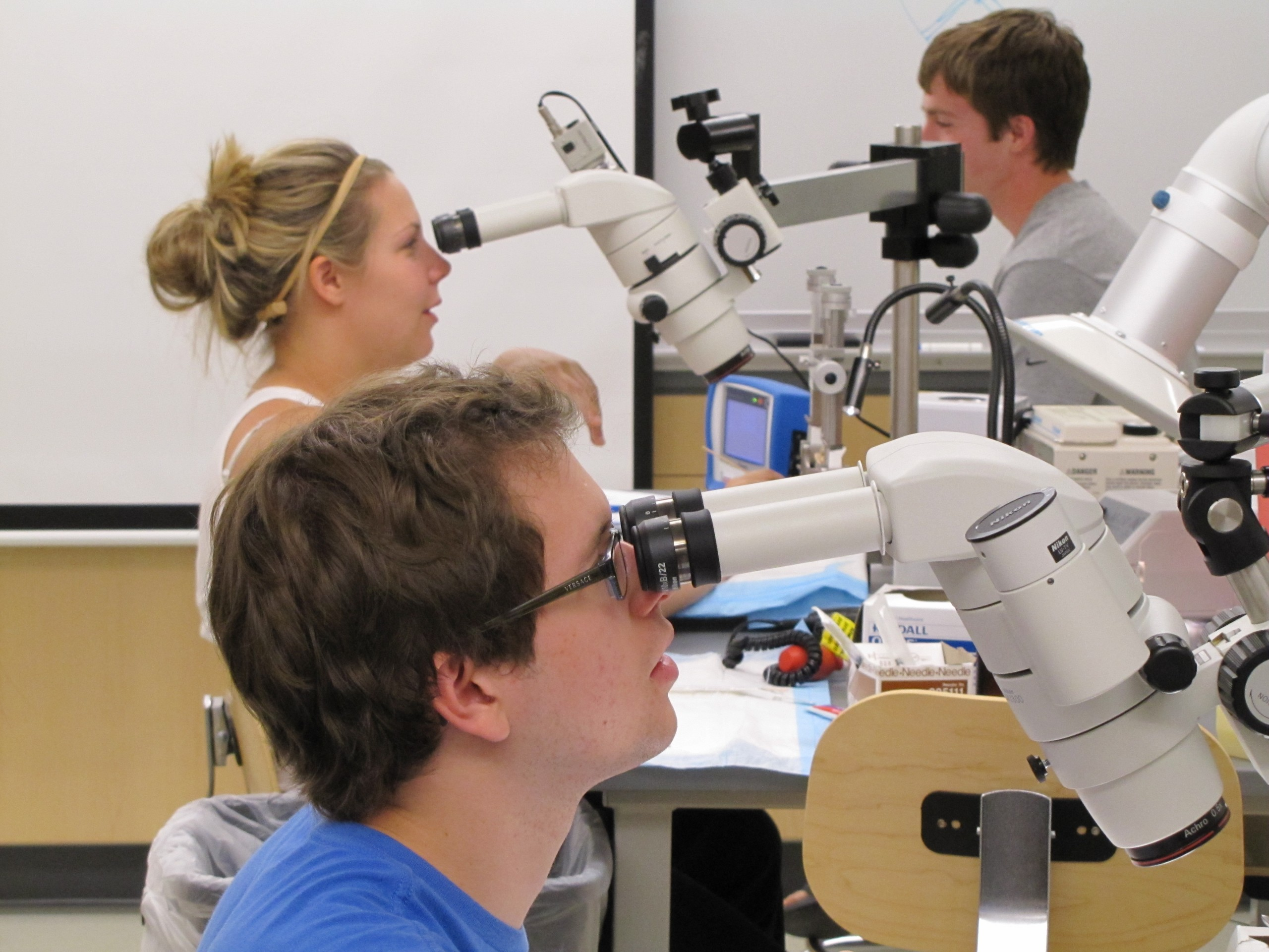 Neuroscience students using stereo dissecting microscopes