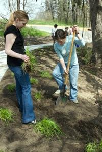 Volunteers plant new native grasses.