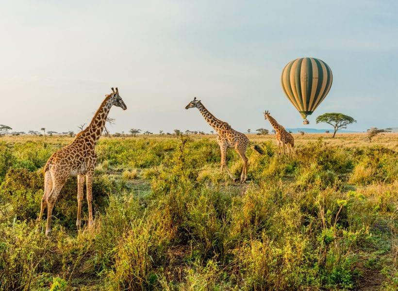 Hot Air Balloons and Giraffes